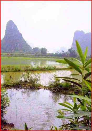 Rýžové pole v Číně